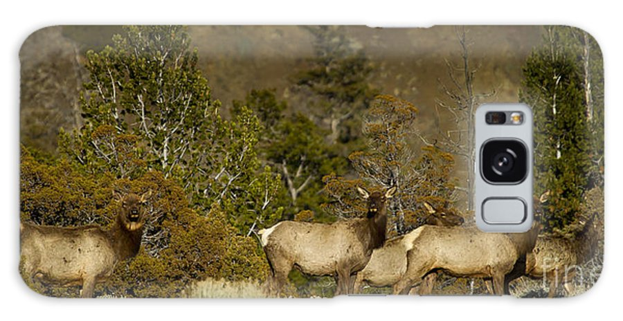 Elk Galaxy S8 Case featuring the photograph Herd Of Cow Elk  #7672 by J L Woody Wooden