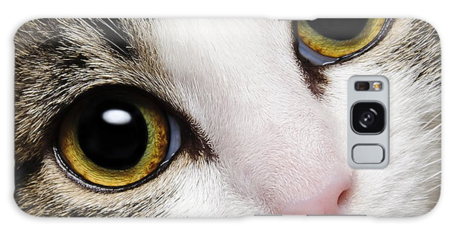 Andee Design Cats Galaxy S8 Case featuring the photograph Here Kitty Kitty Close Up by Andee Design