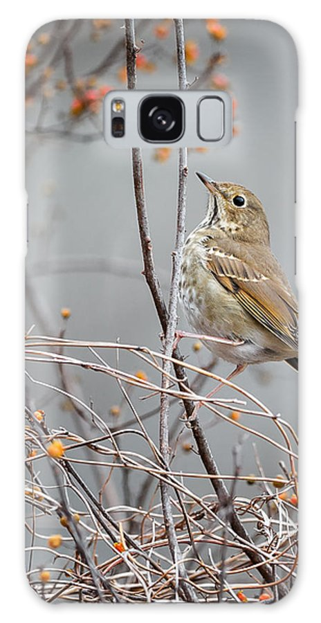 Small Bird Galaxy S8 Case featuring the photograph Hermit Thrush by Bill Wakeley