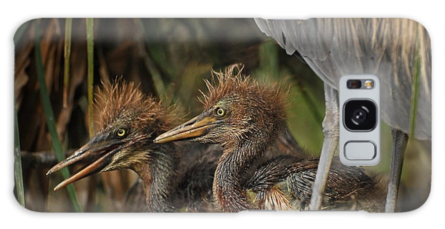 Birds Galaxy S8 Case featuring the photograph Heron Chicks by Jim Rettker
