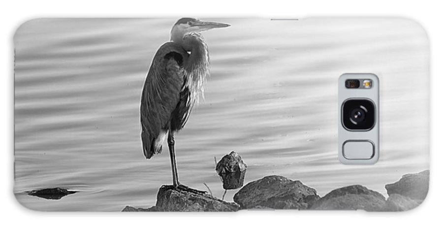 Great Blue Heron Galaxy S8 Case featuring the photograph Heron In Black And White by Betty LaRue