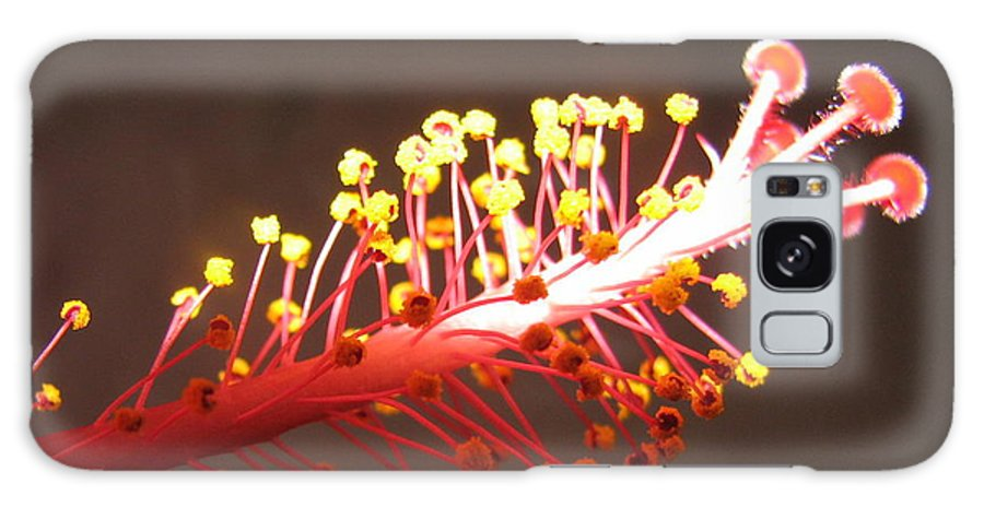 Hibiscus Galaxy Case featuring the photograph Hibiscus by Mary Ellen Mueller Legault