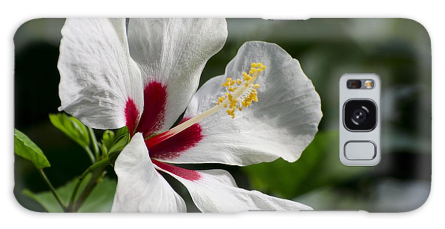 White Hibiscus Galaxy S8 Case featuring the photograph Hibiscus White Wings by Terri Winkler