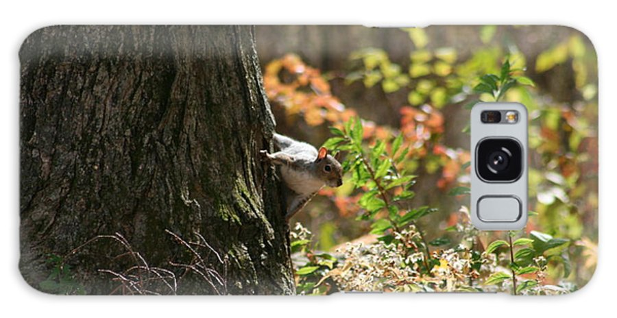 Squirrel Squirrels Galaxy S8 Case featuring the photograph Hide And Seek by Neal Eslinger
