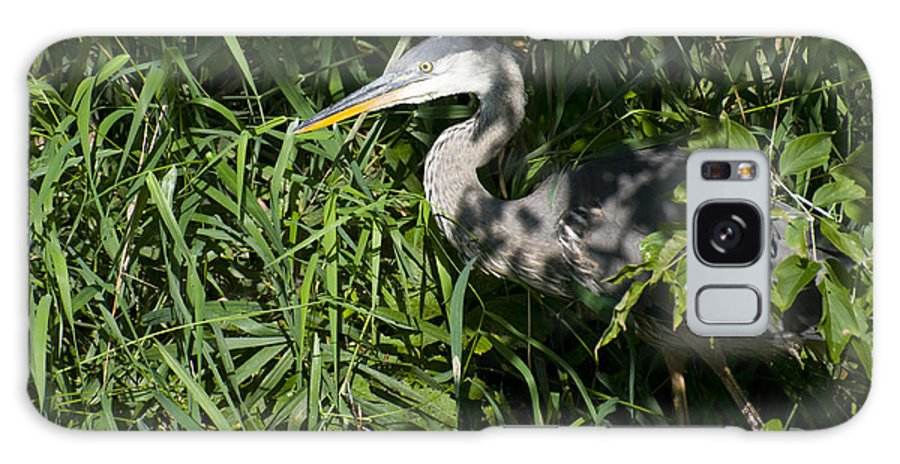 Blue Heron Galaxy S8 Case featuring the photograph Hiding Blue Heron by Gord Horne