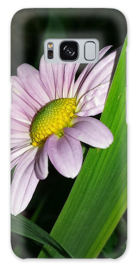 Chrysanthemum Galaxy S8 Case featuring the photograph Hiding by Cynthia Syracuse