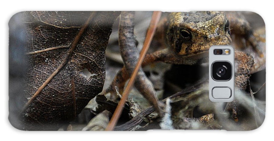 Frog Galaxy S8 Case featuring the photograph Hiding In The Leaf Litter by Sherri Quick