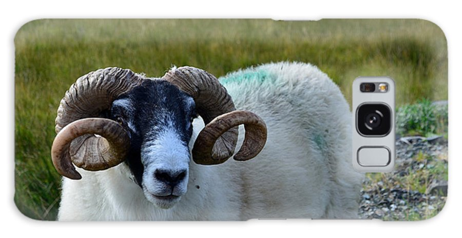 Sheep Galaxy S8 Case featuring the photograph Highland Sheep by DejaVu Designs
