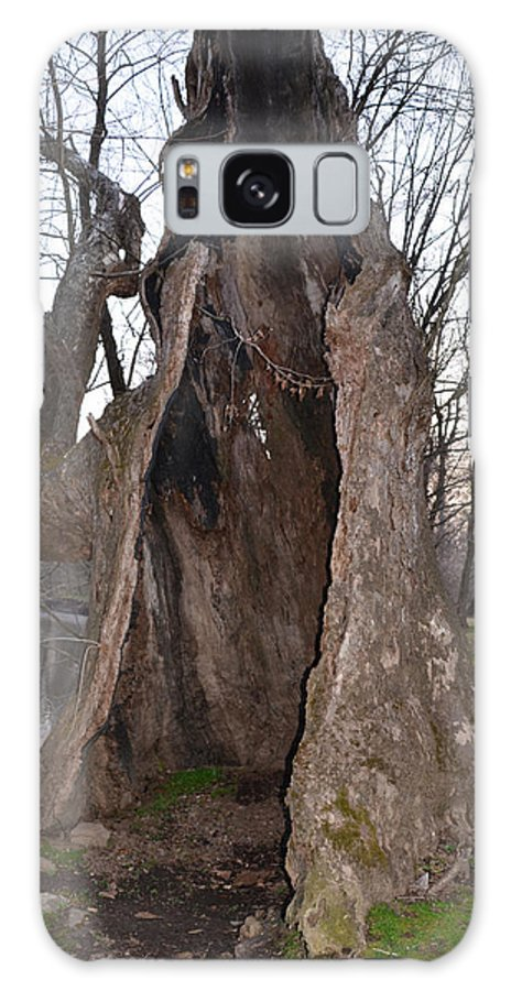 Hollow Galaxy S8 Case featuring the photograph Hollow Tree At Mather Mill by Bill Cannon
