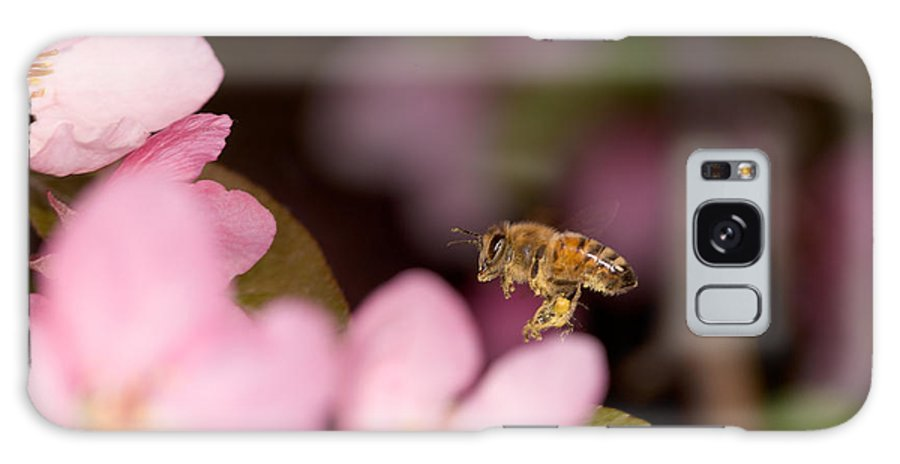 Apis Mellifera Galaxy S8 Case featuring the photograph Honey Bee And Crabapple by Bernard Lynch