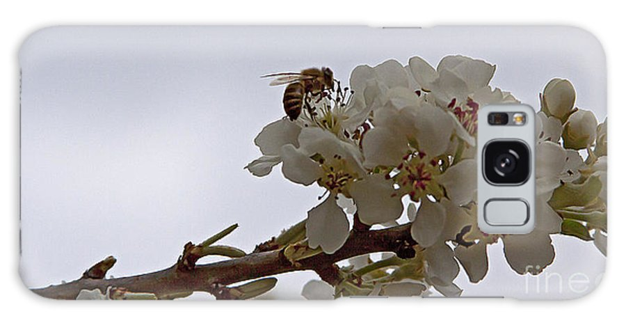 Bee Galaxy S8 Case featuring the photograph Honey Bee On Almond Blossom  #9636 by J L Woody Wooden