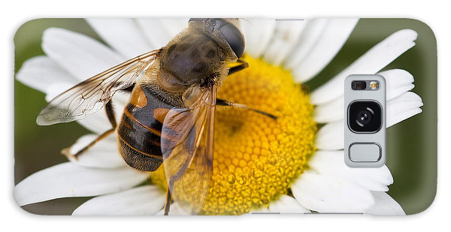 Honey Galaxy S8 Case featuring the photograph Honey Bee On Daisy by Brandon Alms