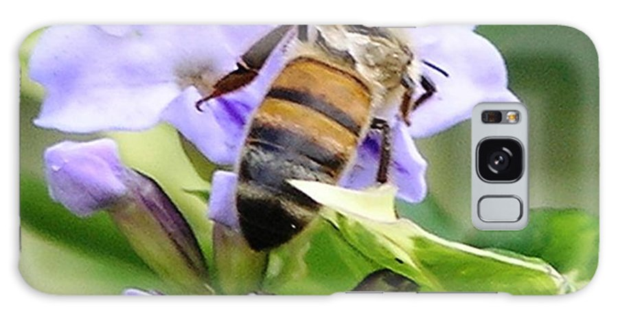 Purple Flower Galaxy S8 Case featuring the photograph Honey Bee On Lavender Flower by Mary Deal