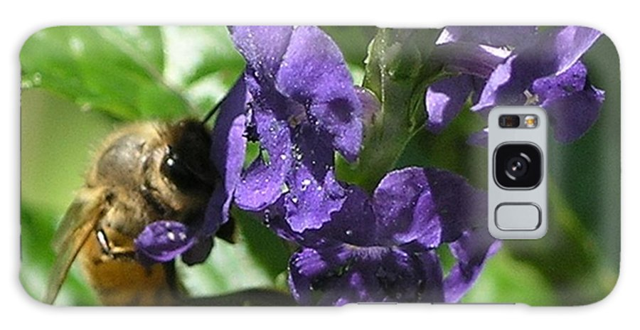 Purple Galaxy S8 Case featuring the photograph Honey Bee On Purple Flower by Mary Deal