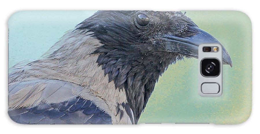Corvus Cornix Galaxy S8 Case featuring the photograph Hooded Crow by Jivko Nakev