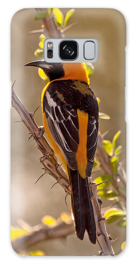 Hooded Oriole. Oriole Galaxy S8 Case featuring the photograph Hooded Oriole by Stephanie Salter
