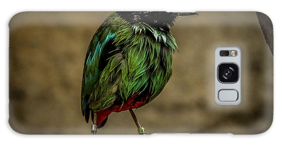 Bird Galaxy S8 Case featuring the photograph Hooded Pitta by Ronald Grogan