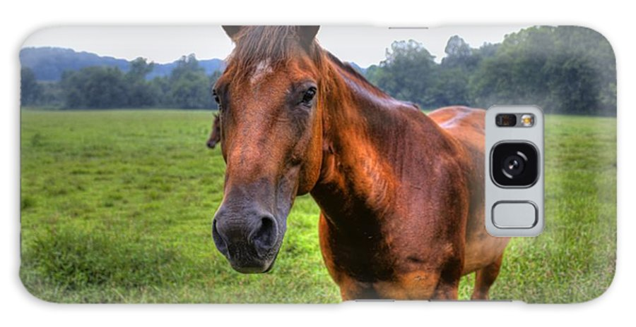 Horse Galaxy S8 Case featuring the photograph Horse In A Field by Jonny D