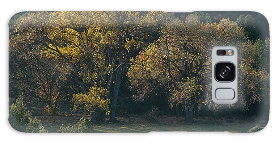 Dave Welling Galaxy S8 Case featuring the photograph Horses In A Backlit Field With Fall Colored Trees Sedo by Dave Welling