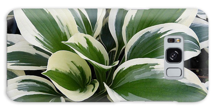 Macro Galaxy S8 Case featuring the photograph Hosta by Pete Trenholm