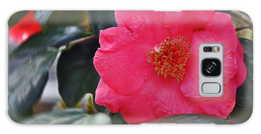 Floral Galaxy S8 Case featuring the photograph Hot Pink Camellia by Deborah Good