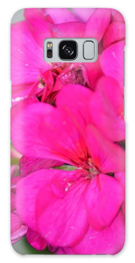 Hot Pink In February Galaxy S8 Case featuring the photograph Hot Pink In February by Maria Urso