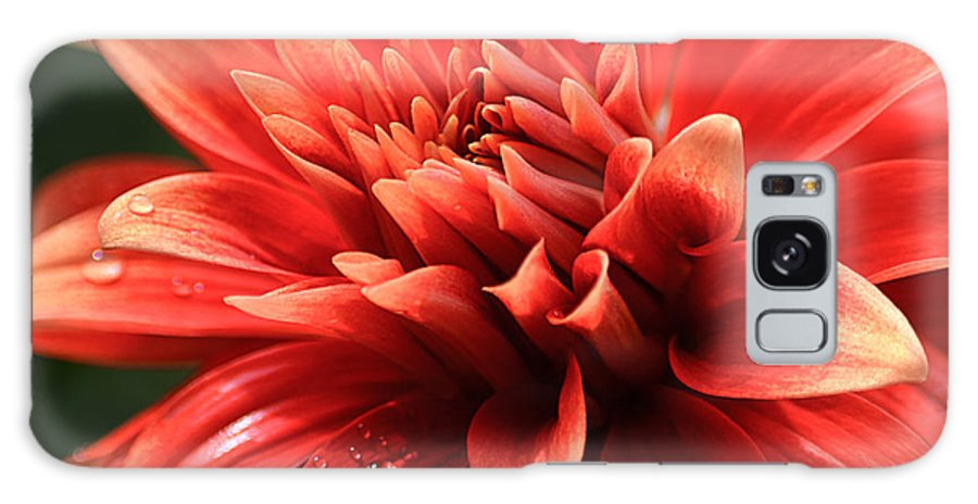 Hot Tamale Dahlia Galaxy S8 Case featuring the photograph Hot Tamale Dahlia by Julie Palencia