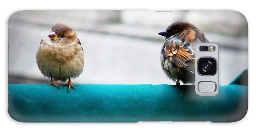 Sparrow Galaxy S8 Case featuring the photograph House Sparrows by Lainie Wrightson