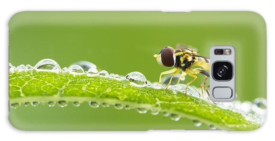 Background Galaxy S8 Case featuring the photograph Hoverfly In Dew by Mircea Costina Photography