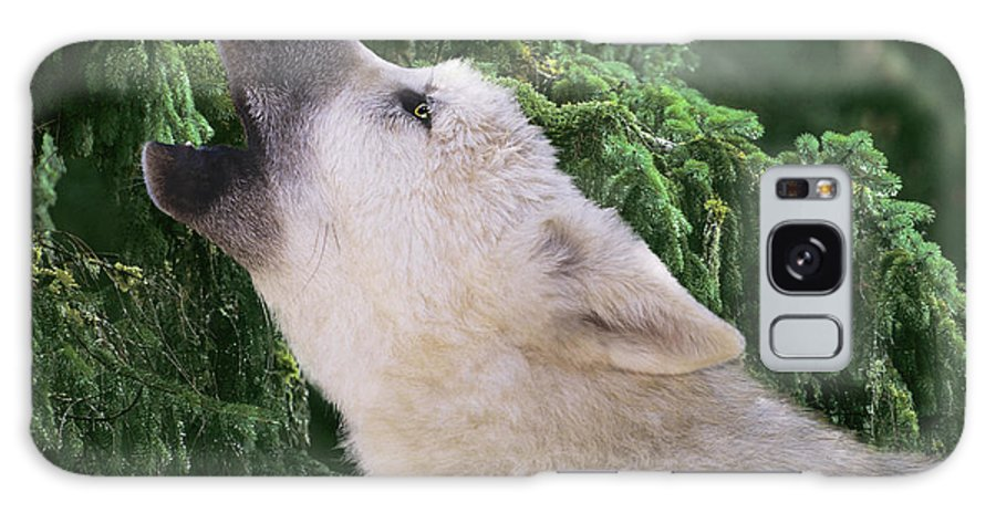Arctic Wolf Galaxy S8 Case featuring the photograph Howlling Arctic Wolf Pup Endangered Species Wildlife Rescue by Dave Welling