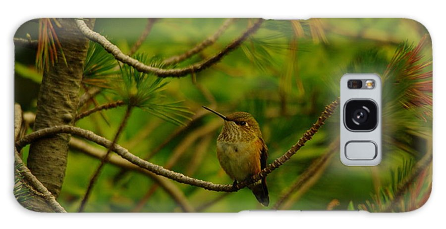 Hummingbirds Galaxy S8 Case featuring the photograph Humming Birds Perched by Jeff Swan