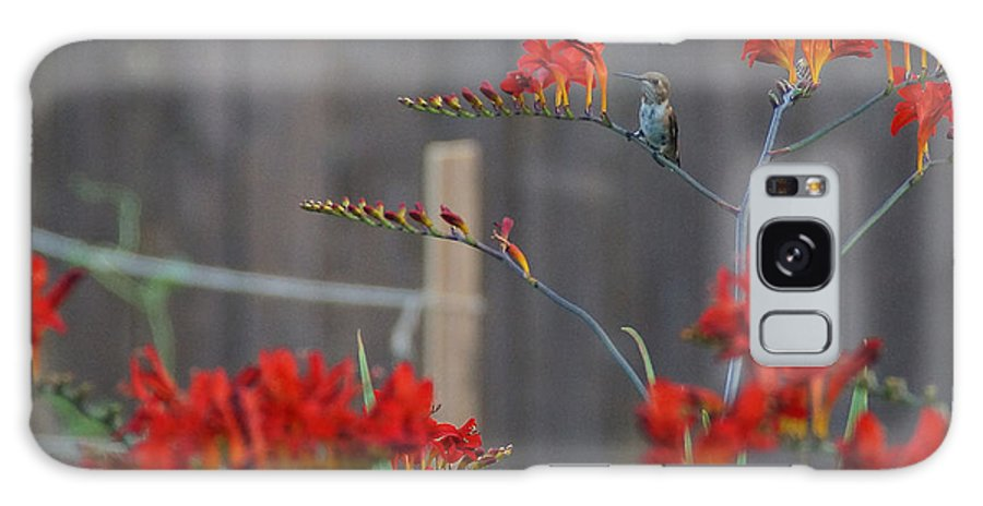 Hummingbird Galaxy S8 Case featuring the photograph Hummingbird At Rest by Mick Anderson