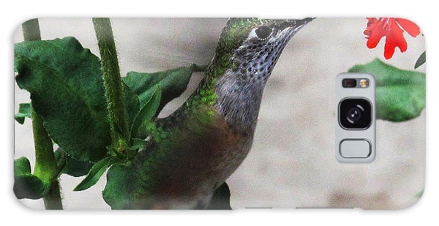 Nature Bird Galaxy S8 Case featuring the photograph Hummingbird Feeding by Greg Plamp