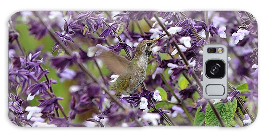 Hummingbird Galaxy S8 Case featuring the photograph Hummingbird Flowers by Scott Hill