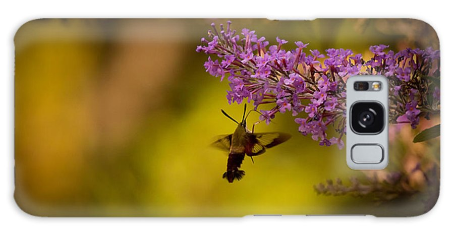 Hummingbird Moth Galaxy S8 Case featuring the photograph Hummingbird Moth by Jennifer Rice