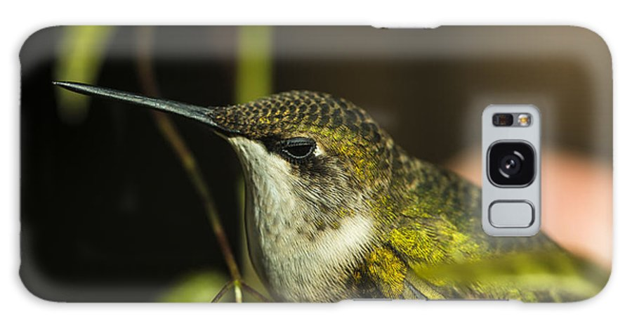 Bird Galaxy S8 Case featuring the photograph Hummingbird by Philip Rispin