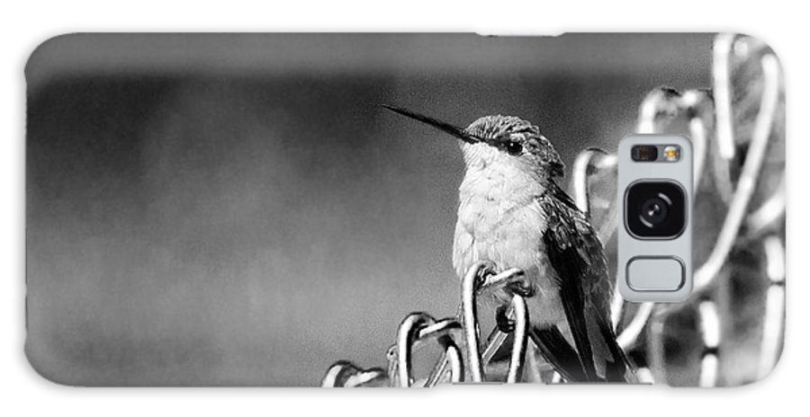 Hummingbird Galaxy S8 Case featuring the photograph Hummy On Fence B And W by Photos By Cassandra