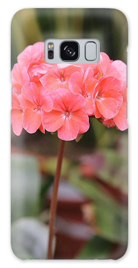 Flower Galaxy S8 Case featuring the photograph Hydrangea Flower by Baruch Y Lebovits