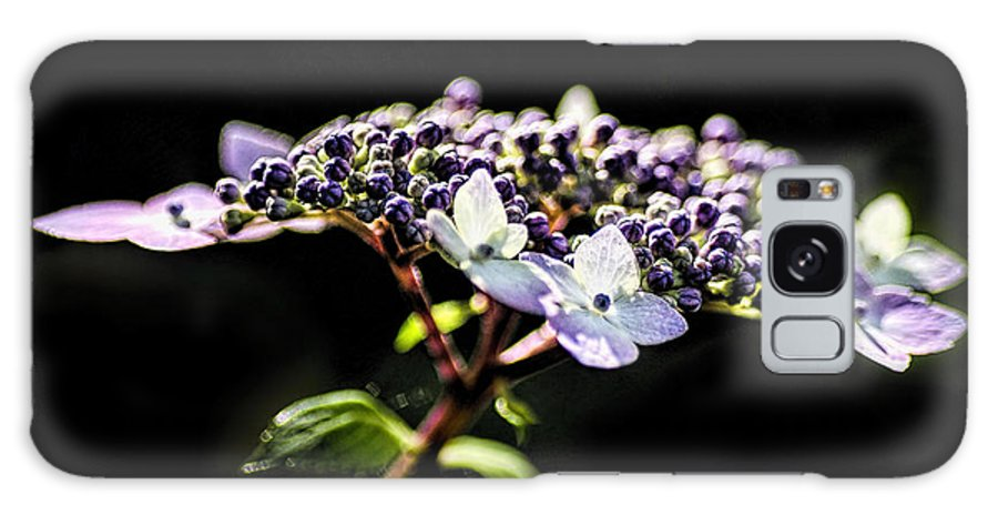 Flower Galaxy S8 Case featuring the photograph Hydrangea by Irene Theriau