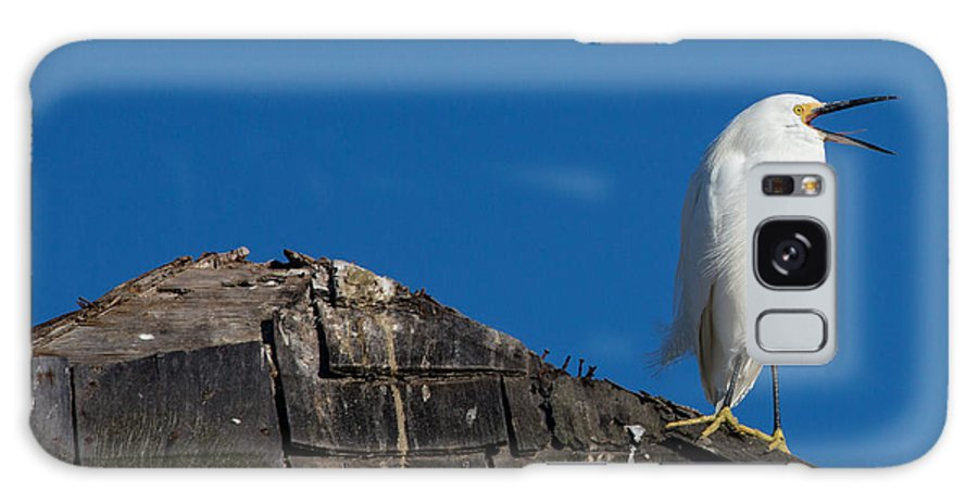 Snowy Egret Galaxy S8 Case featuring the photograph I Cry Fowl by John Daly