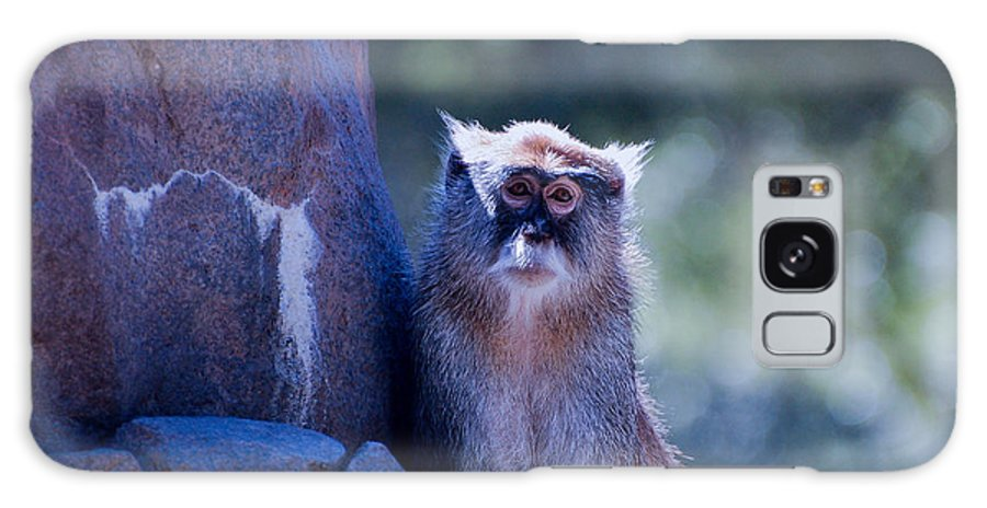 Monkey Galaxy S8 Case featuring the photograph I Really Miss Her by Rich Priest