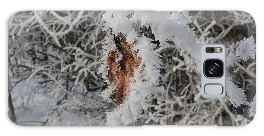 Nature Galaxy S8 Case featuring the photograph Ice Crystals On A Leaf by Stephen Dyck