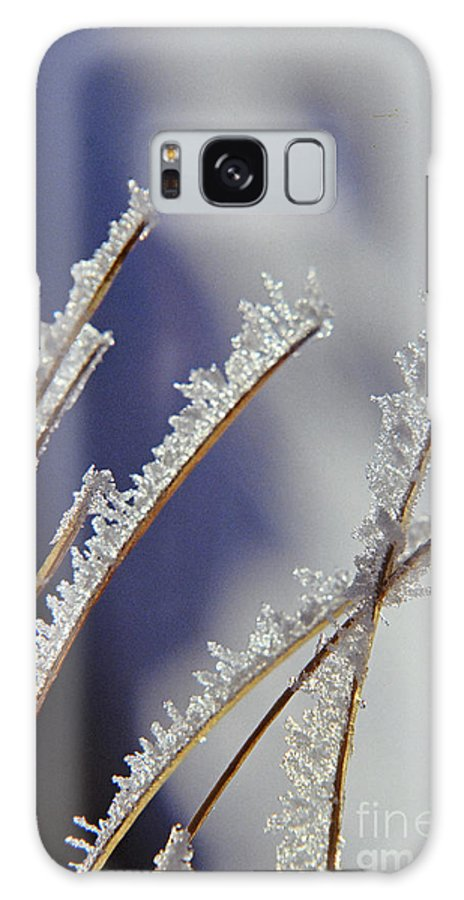 Ice Galaxy S8 Case featuring the photograph Ice Crystals On Fireweed Fairbanks Alaska By Pat Hathaway 1969 by California Views Archives Mr Pat Hathaway Archives