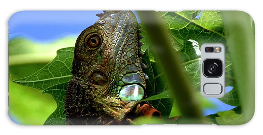 Iguana Galaxy S8 Case featuring the photograph Iguana Tree by Roger Rabiego