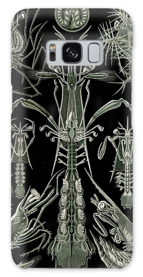 Illustration Galaxy S8 Case featuring the drawing Illustration Shows Invertebrates. Thoracostraca by Artokoloro