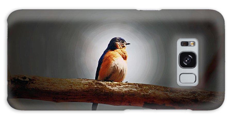 Bluebird Galaxy S8 Case featuring the photograph I'm A Bluebird And I'm Beautiful by Lori Tambakis