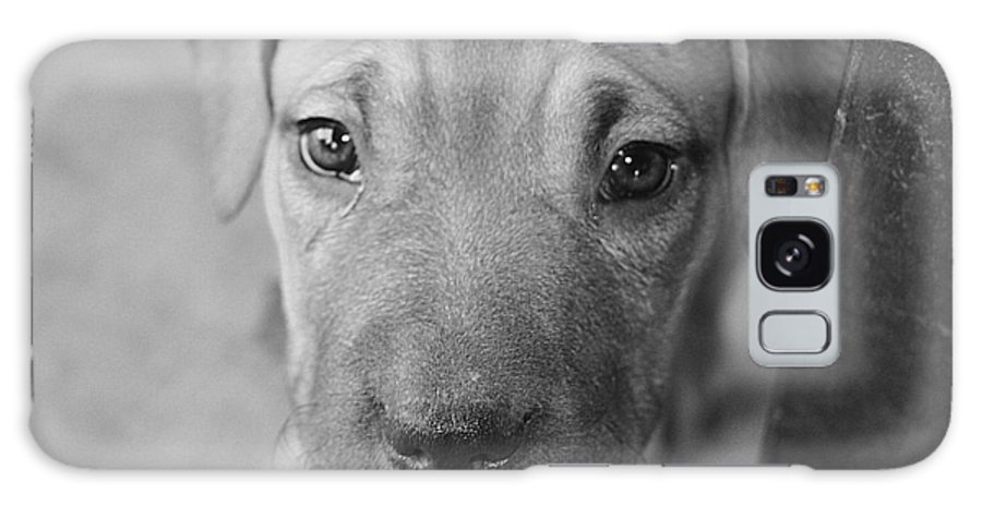 Puppy Galaxy S8 Case featuring the photograph I'm Hungry by Ernest Moreno