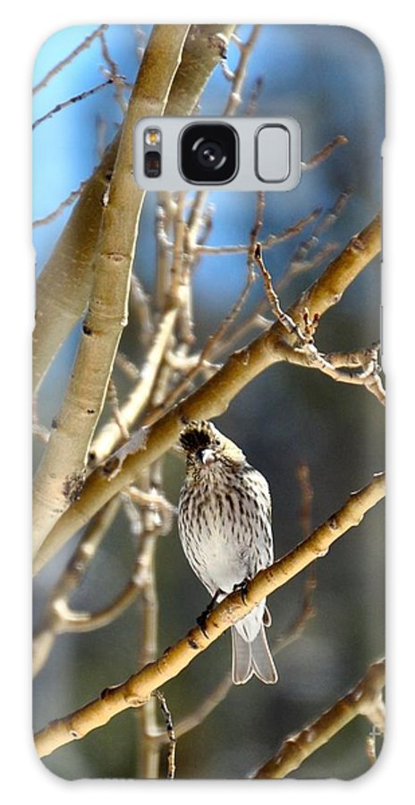 Finch Galaxy S8 Case featuring the photograph I'm Watching You by Susan Chesnut