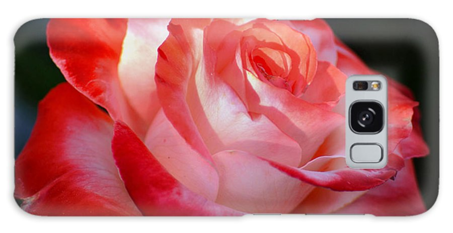Rose Galaxy S8 Case featuring the photograph Imperfect Rose by Deb Halloran