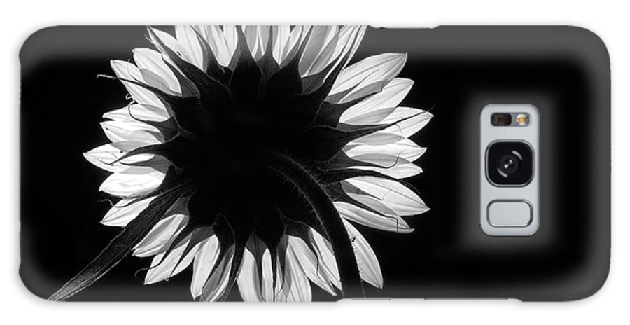 Sunflower Galaxy S8 Case featuring the photograph In Honor by Andrew Brooks